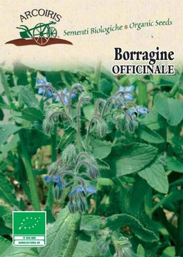 Semi di Borragine Officinale - 2 gr - BU052