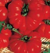 Bu078 - Pomodoro Costoluto Fiorentino - 0,3 g