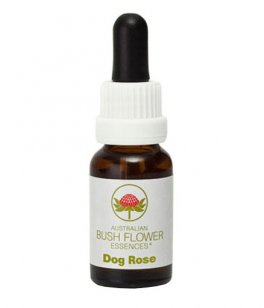 Dog Rose - Fiori australiani - 15 ml