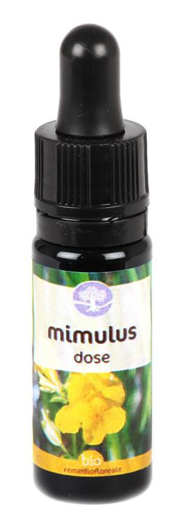 Mimulus - Dose