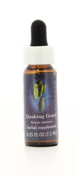 Quaking Grass - Fiori californiani