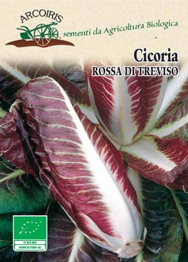Semi di Cicoria Rossa di Treviso Precoce - 5 gr - BU013
