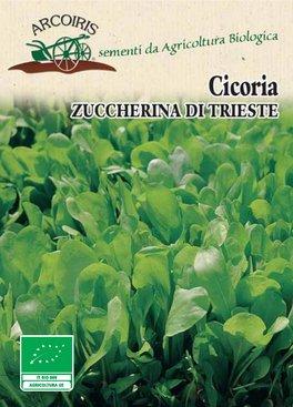 Semi di Cicoria Zuccherina di Trieste - 5 gr - BU035