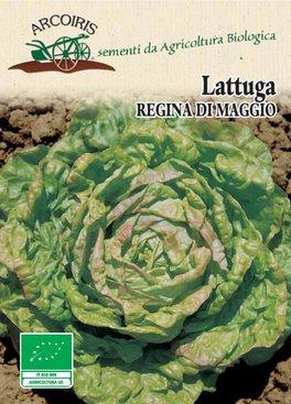 Semi di Lattuga Regina di Maggio - 5 gr - BU020