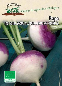 Semi di Rapa di Milano Colletto Viola - 8 gr - BU043