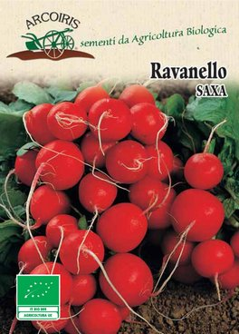 Ravanello Saxa 2 - BU030