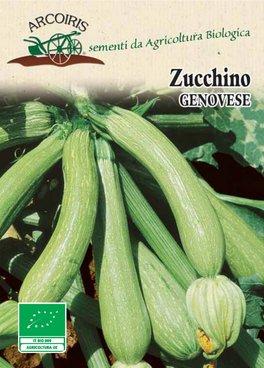 Semi di Zucchino Genovese - 7 gr - BU033