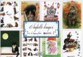 16 Biglietti d'Auguri di Eleganza Felina