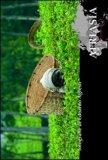 Afriasia