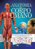 L' Anatomia del Corpo Umano — Libro