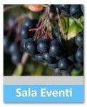Antiossidanti naturali come chiave di salute: Aronia Melanocarpa