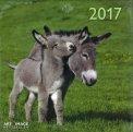 Asini - Calendario 2017 - Grande