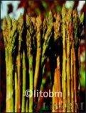 Semi di Asparago Montina 10 gr.