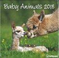 Baby Animals - Calendario 2018