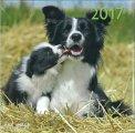 Cani - Calendario 2017 - Grande