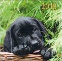 Cani - Calendario 2018