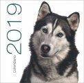 Cani - Calendario da Muro 2019