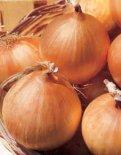 Cipolla Gialla Sturon 25 gr.