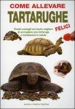 Come Allevare Tartarughe Felici