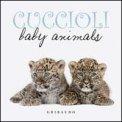 Cuccioli - Baby Animali