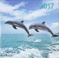 Delfini - Calendario 2017 - Grande