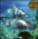 Dolphin Card 1  — CD