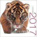Felini - Calendario 2017