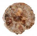 Fetta Legno - Fossile Grande