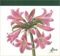 Flower Desk - Blocco di Carta - Amarillys Fiori Rosa - Libro