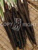 G402 - Scorzonera Hispanica - Verbeterde Reuzen Nietschierts 25 gr