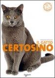 Il Gatto Certosino