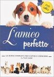 L'amico Perfetto - DVD