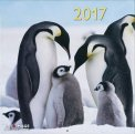 Pinguini - Calendario 2017 - Grande