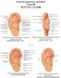 Poster Punti di Agopuntura Auricolare 1-2-3