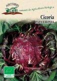 Semi di Cicoria Palla Rossa - 5 gr - BU012