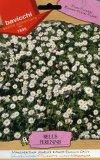 Semi di Margheritina Semplice Bianca - Bellis Perennis