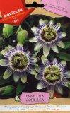 Semi di Passiflora o Fiore della Passione - Passiflora Coeruelea