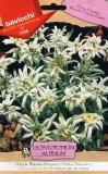 Semi di Stella Alpina - Leontopodium Alpinum