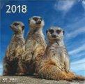 Suricati - Calendario 2018