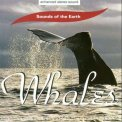 Whales - CD