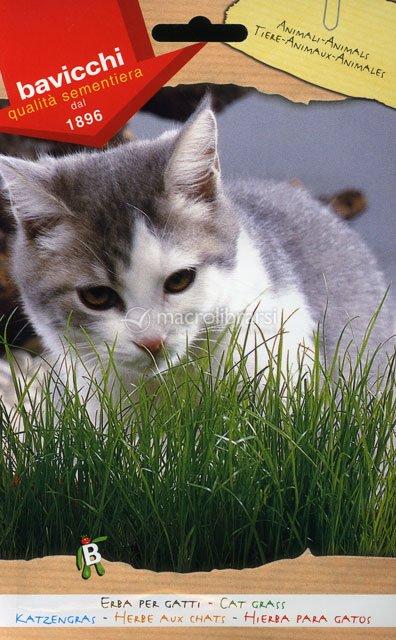 Semi di erba per gatti bavicchi for Erba per gatti