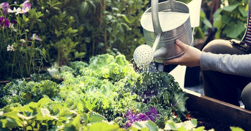 5 trucchi per la salute delle piante