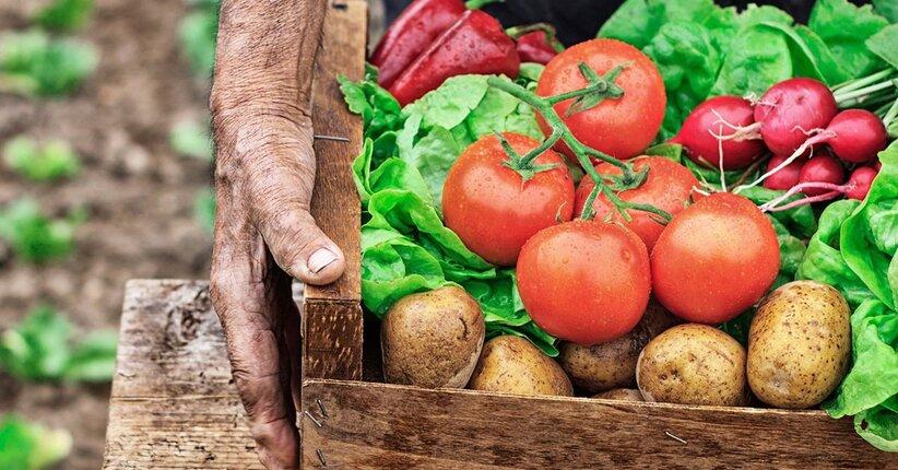 Agricoltura biodinamica: qualità superiore, senza compromessi
