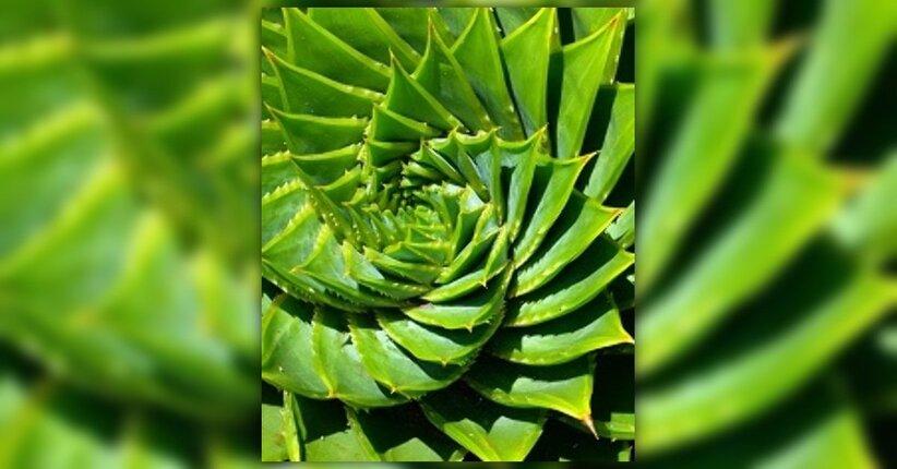Aloe in estate: quali sono i benefici?