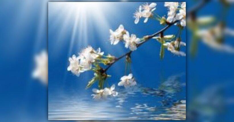 Risultati immagini per i fiori di  Madame Blavatsky