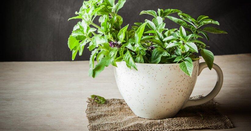Ayurveda: 10 piante officinali benefiche per la salute