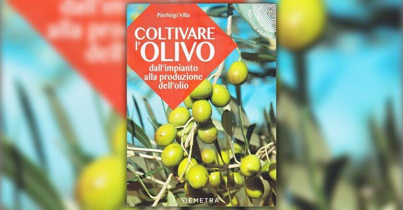 """Caratteristiche generali - Estratto da """"Coltivare l'Olivo"""""""