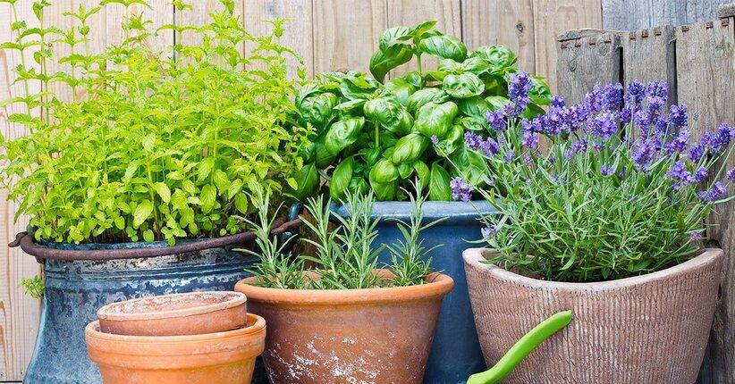 Come coltivare le piante aromatiche in balcone