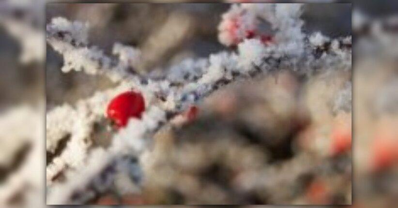Come sopravvivere all'inverno con i Profumi della Natura