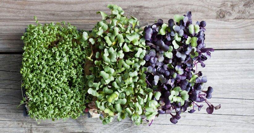 Crescere i germogli: perché iniziare?